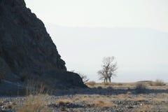 Un albero asciutto solo contro il contesto delle montagne di Altai in Mongolia Fotografia Stock Libera da Diritti
