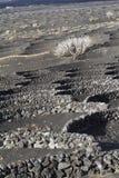 Un albero bianco sta sviluppandosi nella zona vulcanica Immagine Stock