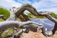 Un albero calvo sulla spiaggia con l'oceano blu dietro fotografia stock