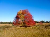 Un albero in un campo nel sud Immagine Stock Libera da Diritti
