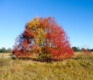 Un albero in un campo nel sud Fotografia Stock