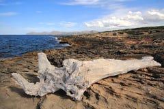 Un albero candeggiato in una baia con il mare blu immagine stock
