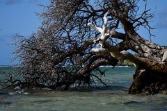 Un albero che bacia il mare Fotografia Stock