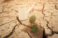 Un albero che cresce sulla terra incrinata Fendi il suolo secco nella siccità, colpita di mutamento climatico fatto riscaldamento Fotografie Stock Libere da Diritti