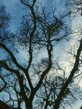 Un albero come i miei cuori immagini stock libere da diritti