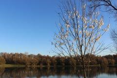 Un albero con i fiori bianchi senza foglie sui precedenti dello stagno Fotografie Stock Libere da Diritti
