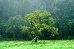 Un albero con il raggio di luce e di nebbia Immagini Stock