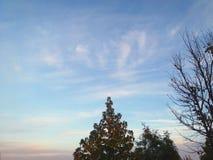Un albero con la luna immagini stock