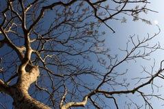 Un albero con la maglia dei rami e di meno delle foglie Immagini Stock Libere da Diritti