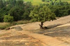 Un albero con la roccia della collina del complesso sittanavasal del tempio della caverna immagini stock