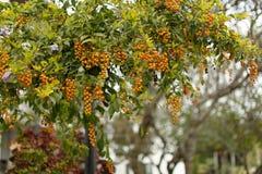Un albero con un mazzo giù Fotografie Stock Libere da Diritti