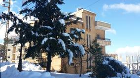 Un albero con neve Immagine Stock