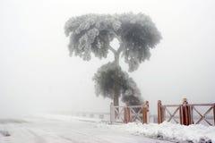 Un albero congelato Immagini Stock Libere da Diritti