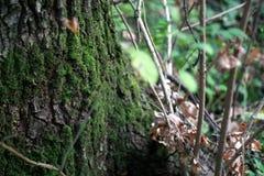 Un albero coperto di muschio fotografia stock
