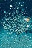 Un albero coperto di neve in una notte fredda di inverno immagini stock libere da diritti