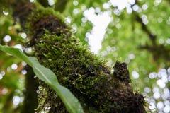 Un albero coperto in muschio verde Immagini Stock Libere da Diritti