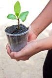 Un albero dalla mano dei bambini Immagini Stock