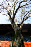 Un albero davanti alla casa fotografia stock