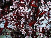 Un albero dei fiori Immagini Stock