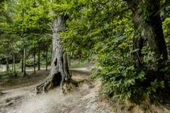 Un albero del fantasma Fotografia Stock Libera da Diritti
