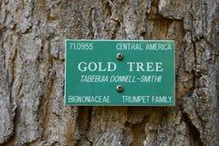 Un albero dell'oro Fotografia Stock
