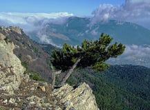 Un albero di caduta solo sopra una montagna Fotografia Stock Libera da Diritti