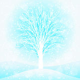 Un albero di inverno Immagine Stock