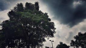 Un albero di lustro con il cielo del datk immagine stock libera da diritti