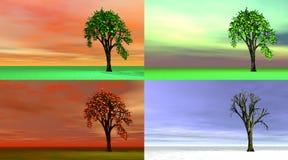 Un albero di quattro stagioni Fotografia Stock