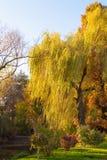 Un albero di salice piangente vicino ad un lago ed i suoi rami commoventi da Ni immagini stock