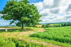 Un albero di sette stelle Immagini Stock Libere da Diritti