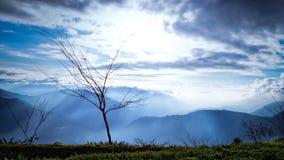 Un albero di sguardo nudo ancora sopravvive a e forze della natura nel freddo immagini stock libere da diritti