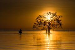 Un albero di Sun ad alba Fotografia Stock