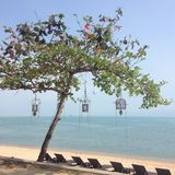 Un albero ed il mare Fotografia Stock Libera da Diritti