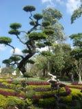 Un albero esotico Fotografie Stock Libere da Diritti