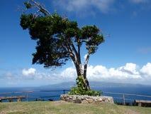 Un albero esposto al vento su un bluff Fotografie Stock Libere da Diritti