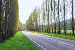 Un albero ha allineato la strada campestre vicino a Marysville, Australia Immagine Stock