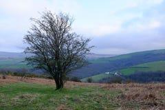 Un albero isolato con la Rolling Hills di Devon nei precedenti fotografie stock libere da diritti