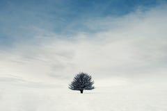 Un albero isolato nelle montagne Fotografie Stock Libere da Diritti