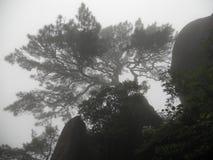 Un albero magico sulla montagna Immagini Stock Libere da Diritti