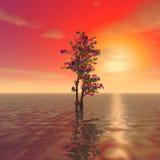 Un albero misterioso Fotografia Stock
