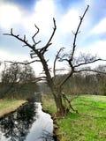 Un albero morto che sta al lungomare Immagini Stock
