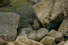 Un albero morto secco in montagne, una valle della montagna Fotografia Stock Libera da Diritti