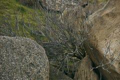 Un albero morto secco in montagne, una valle della montagna Fotografia Stock