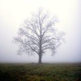 Un albero in nebbia fotografie stock libere da diritti