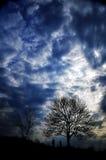 Un albero nel cielo tenebroso Fotografia Stock Libera da Diritti