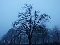 Un albero nel parco di Kelemegdan Immagini Stock Libere da Diritti
