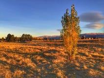 Un albero nel tramonto Immagine Stock