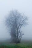 Un albero nella nebbia Fotografia Stock Libera da Diritti
