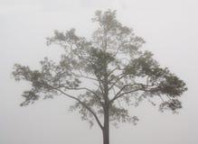 Un albero nella scena nebbiosa Fotografie Stock Libere da Diritti